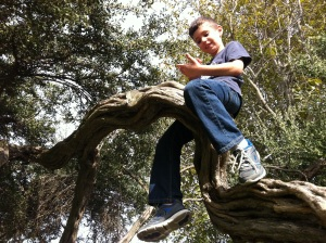 jacob_in_the_tree