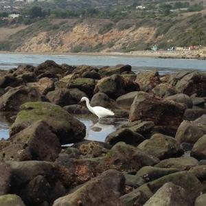 greta egret
