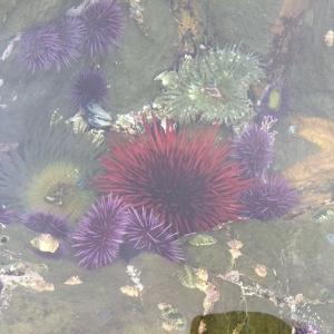 underwater urchins